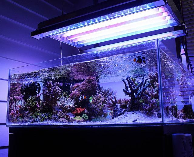 17+ images about Reef Tank  Inspiration on Pinterest  Saltwater tank, Reef  -> Aquarium Table Baroque