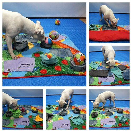 Het spel van de maand wordt verzorgd door collega Helen Hagestein, auteur van de boeken Spellen voor honden, deel 1, 2 en 3, en beheerder van de Facebookgroep Spelideeën voor honden. Helen is lid v…