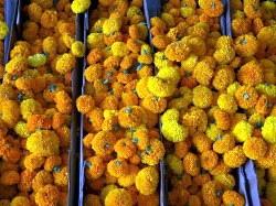 informacion sobre la Flor de muerto o Cempasuchil: Flor De, La Flor, On, Of The, Flowers Plants Photography, Dead, Day