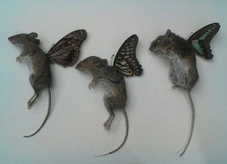 Mouse fairies.                                                       …