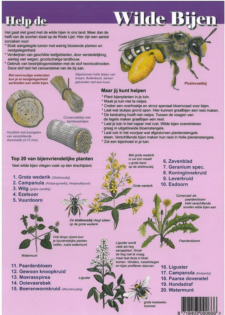 Educatieve kaart Wilde Bijen | Landschap Noord-Holland