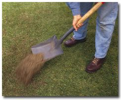 Tips to a good lawn