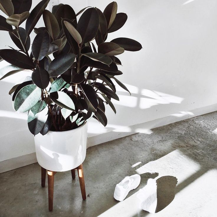 inspiration tropical house plant care. Indoor Plant Trends Ins and Outs of Plants 183 best House  Gardening Zero Waste images on Pinterest