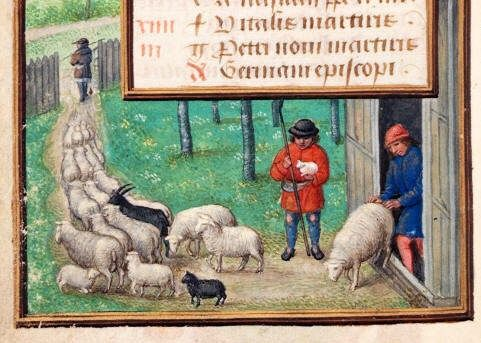 Image result for sheep manuscript illumination