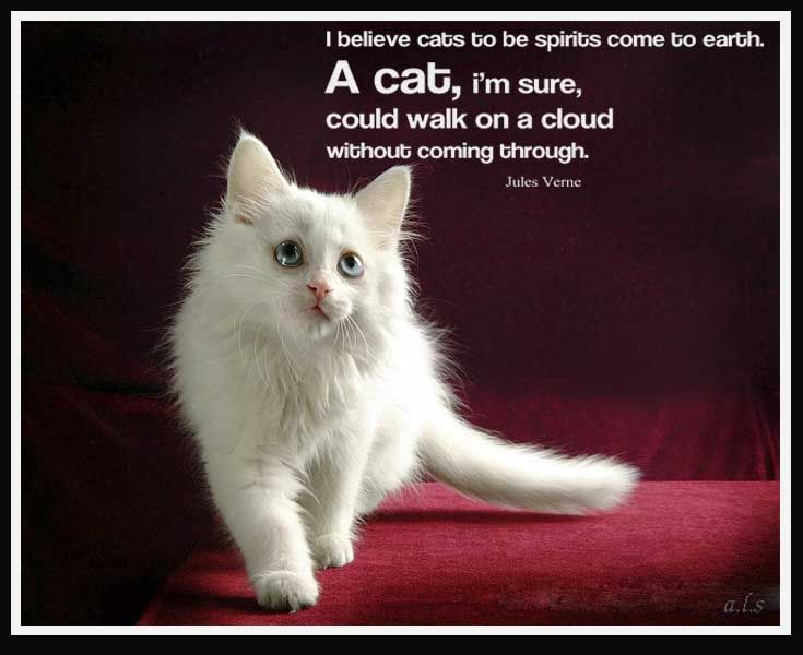 Cat Quotes Simple 21 Best Cats Images On Pinterest  Cat Quotes Quotes About Cats And