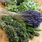 Overzicht van kruiden en specerijen - Recepten en kooktips voor klassieke gerechten en ingredienten