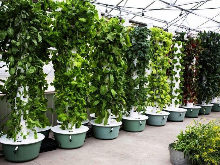 Olive Garden Design Landscaping Harrogate without Garden ...