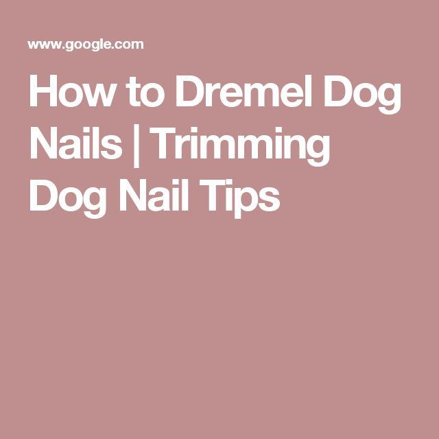 How to Dremel Dog Nails | Trimming Dog Nail Tips