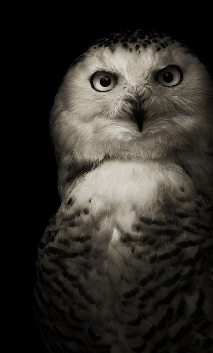 Черно-белые фотографии животных! . Комментарии : LiveInternet - Российский Сервис Онлайн-Дневников
