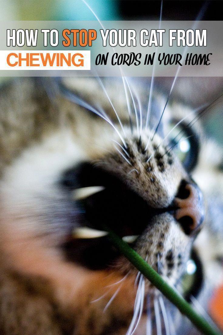 F I P Cats Warriorcatsbooks Cat Training Cat Behavior Cat Care