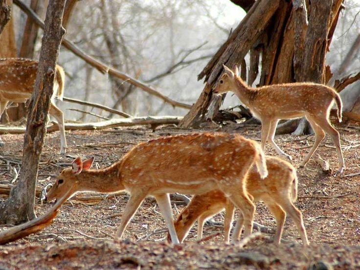 Mount Abu Wildlife Sanctuary - in Rajasthan, India