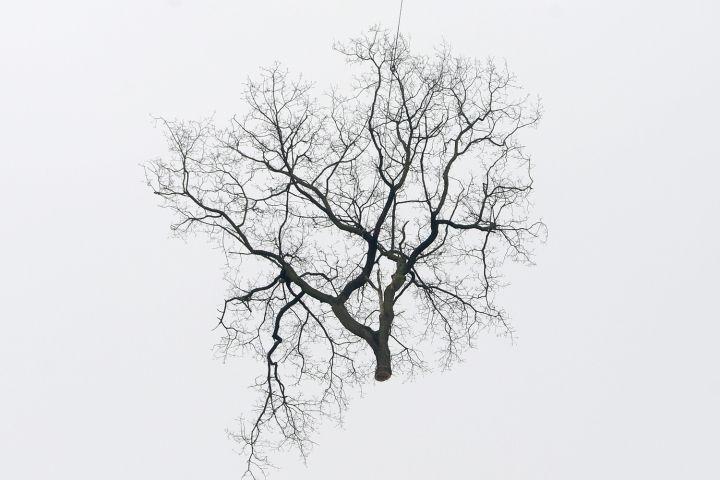 GERMANY-TREE-CUTTING-OFFBEAT