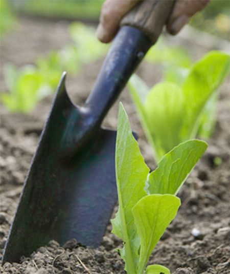 5 must have garden tools to make gardening more enjoyable for Vegetable garden tools