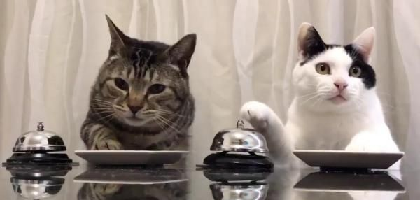 Hungry cats ring bells for treats
