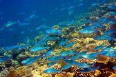 Ocean Indyjski. podwodny świat — Zdjęcie stockowe