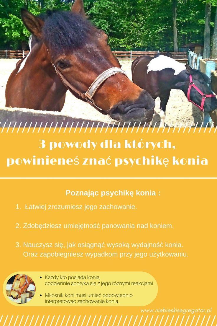 3 powody dla których powinieneś znać psychikę konia – Niebieski Segregator