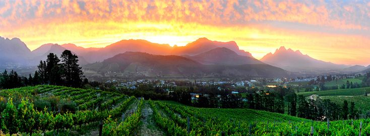 Dieu Donne Vineyards, Franschhoek