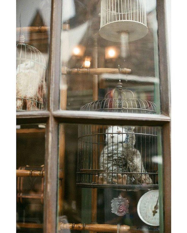 ⋆*  #usj   #ハリーポッター   #harrypotter   #フクロウ   #owl   #窓   #window   #hogsmead   #ホグズミード   #fantasy   #nikomatEL   #ニコマート   #35mm   #nikon   #filmcamera   #filmphotography   #analog   #nofilter   #フィルム   #フィルム写真   #ファインダー越しの私の世界   #写真好きな人と繋がりたい   #写真撮ってる人と繋がりたい   #フィルム部