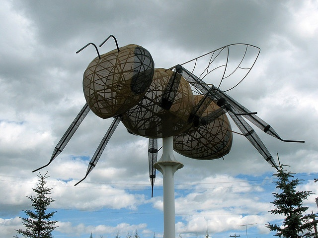 World's largest bee! Alberta Canada