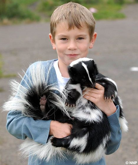 Yes- I will have an actual Pet Skunk at some point on this adventure.