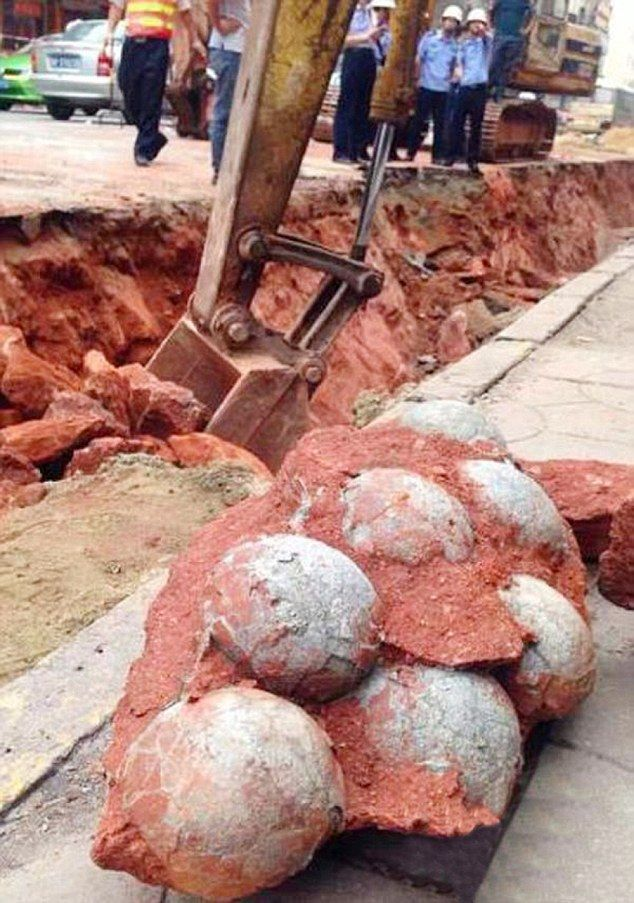 Egg-straordinary find: Workers point to the dinosaur eggs that were discovered as they were fitting a new sewage pipe in Heyuan, south-east China