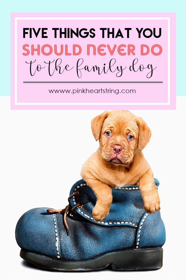 5 Things You Should Never Do To The Family Dog Family Dogs Dogs