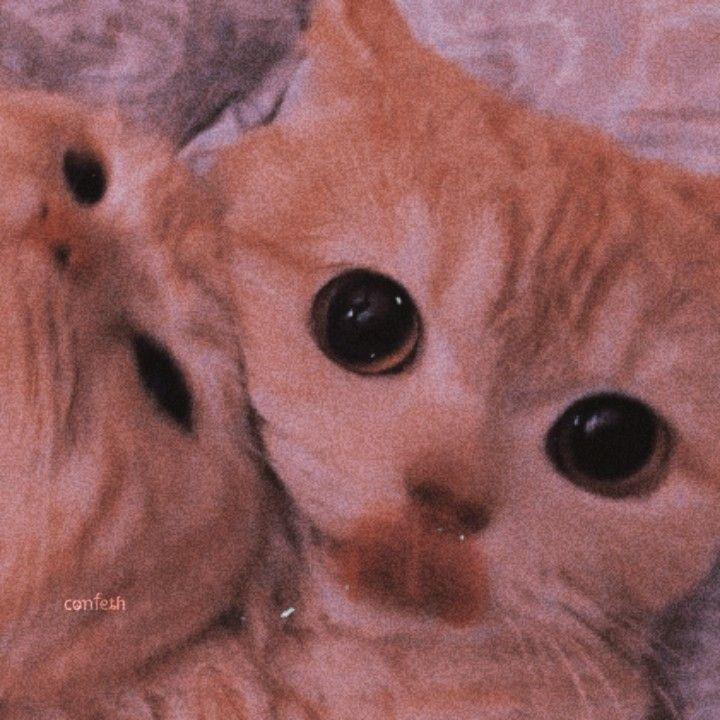 Wallpaper Couple Kucing