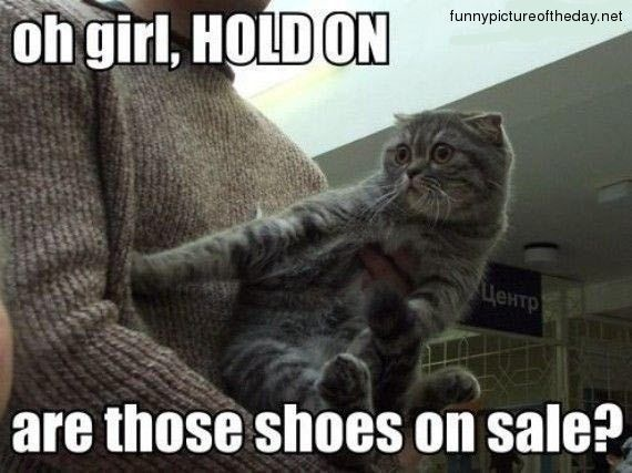 Cat Shopping Funny Shoes Mall: Cats, Shoes, Hold On, Animals, Girl, Funny Cat, Funny Stuff, Funnies