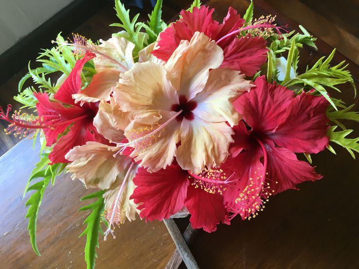 Fresh #hibiscus in my #bure everyday.