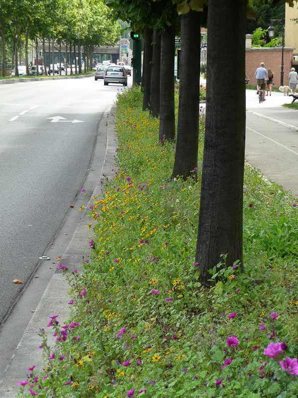 Prairie fleurie pour la biodiversité à Suresnes (92) http://www.pariscotejardin.fr/2013/08/prairie-fleurie-pour-la-biodiversite-a-suresnes-92/