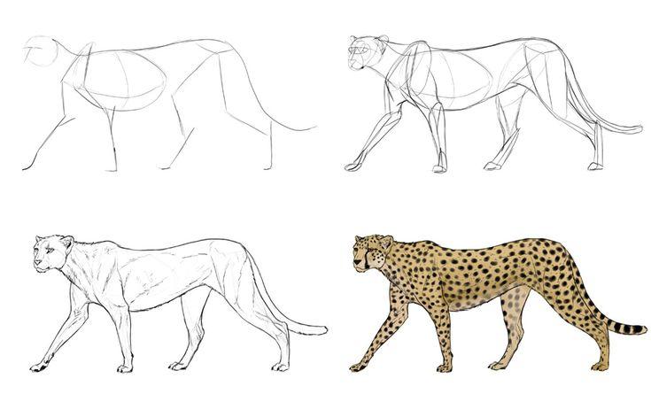 картинки гепарда как нарисовать номера