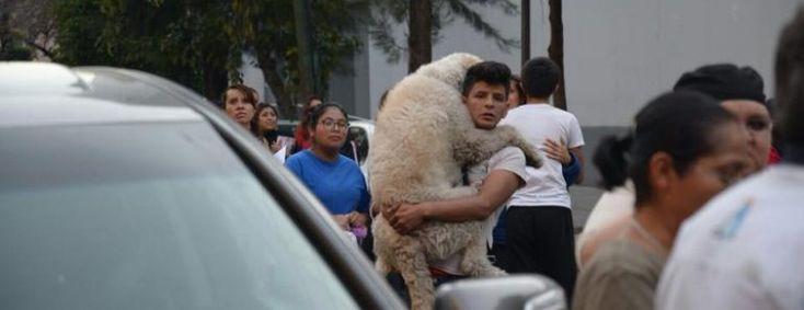 Las fotos de un joven abrazando a su perro para tranquilizarlo después del terremoto de México enternecen las redes sociales #terremoto #mexico #perro #perros #animales #animal #mascota #mascotas #noticia #noticias #dog #dogs #amor