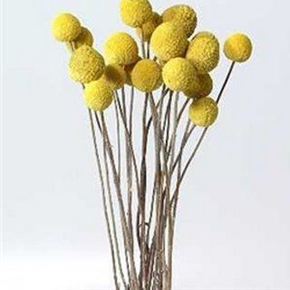 yellow bobble flowers: Yellow Flowers, Artificial Flowers, Wedding Flowers Bouquets, Buttons Flowers, Silk Flowers, Billy Buttons, Golden Yellow, Flowers Ideas, Flowers Decor