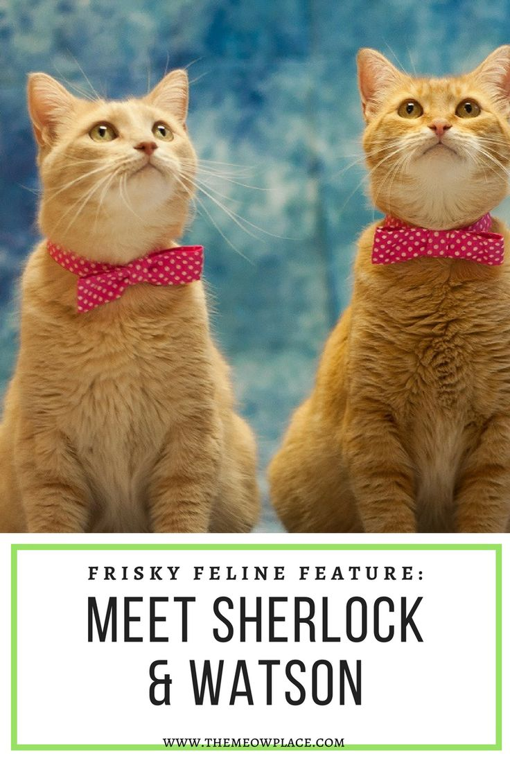 These Baker Street buddies almost didn't make it out of their local PetSmart, but two caring humans just couldn't stop thinking about them. Find out more at The Meow Place blog by tapping the picture.