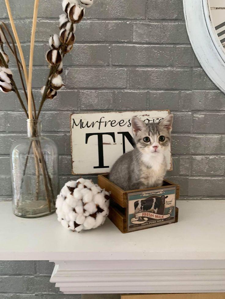Adopt Charlette on Petfinder Kitten adoption, Help