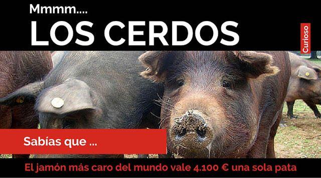 """Las mejores curiosidades que no sabías de los """"CERDOS""""    10 cosas que no sabías de los cerdos  Sabías que  Este animal domesticado desde hace cerca de diez mil años. Antes los hombres de las cavernas cazaban jabalíes el antepasado de los cerdos.  Curiosidades acerca de los cerdos los de cuatro patas está claro.  La pata de cerdo más del mundo es la del cerdo Manchón variedad de raza Ibérica de la región de Jabugo en España se llega a pagar 4.100 una sola unidad Mmm que rica.   Parece que…"""