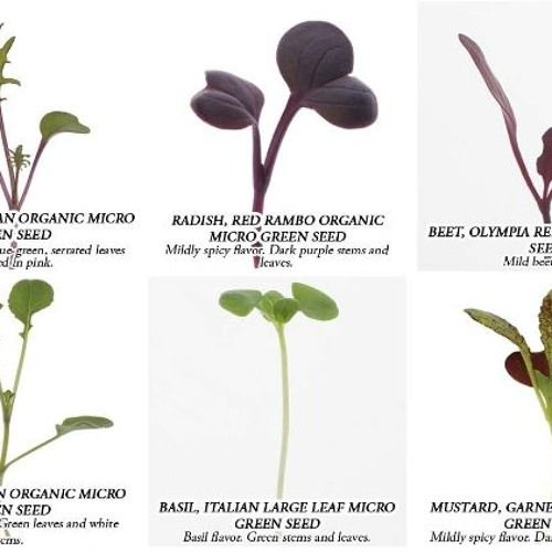 List for Growing Microgreens at Home Podcast by Marty Ware from the Marty's Garden Show!