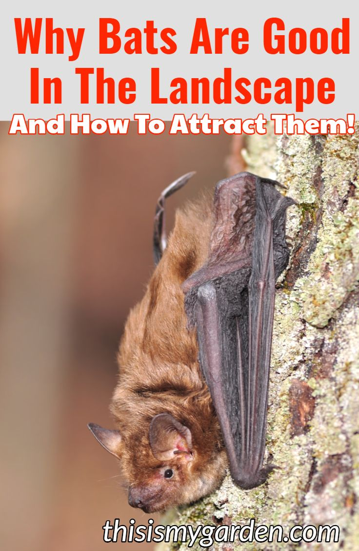 Attracting bats to your yard is a great way to keep pesky