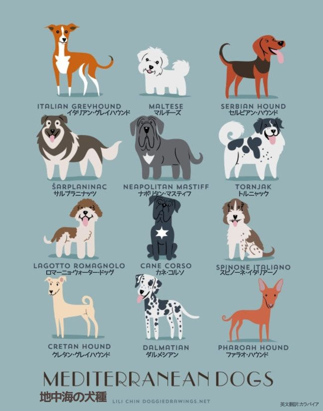 Mediterranean Dogs