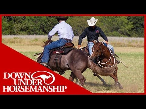 Clinton Anderson: How to Fix a Buddy-Sour Horse - Downunder Horsemanship - YouTube