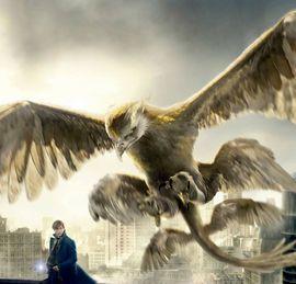 Oiseau-tonnerre | Wiki Harry Potter | Fandom powered by Wikia