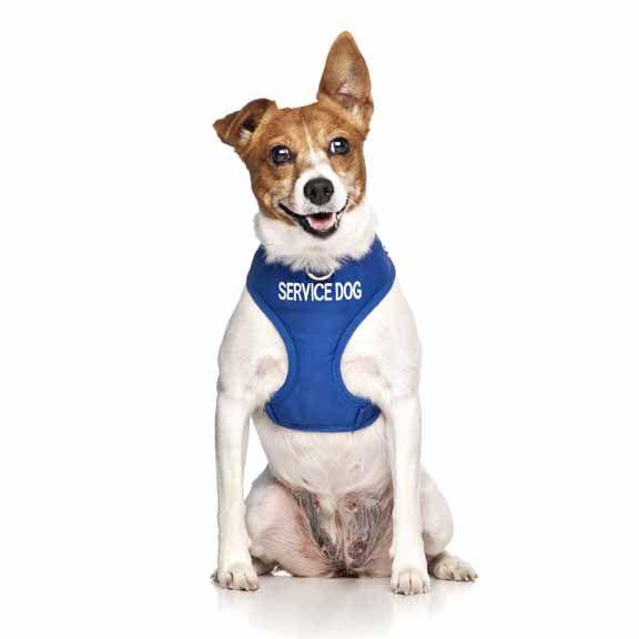 "Blue SERVICE DOG vest harness   Fits Max Neck 31cm (12"") Chest 38-60cm (15-24"")   Model: Jack Russell"