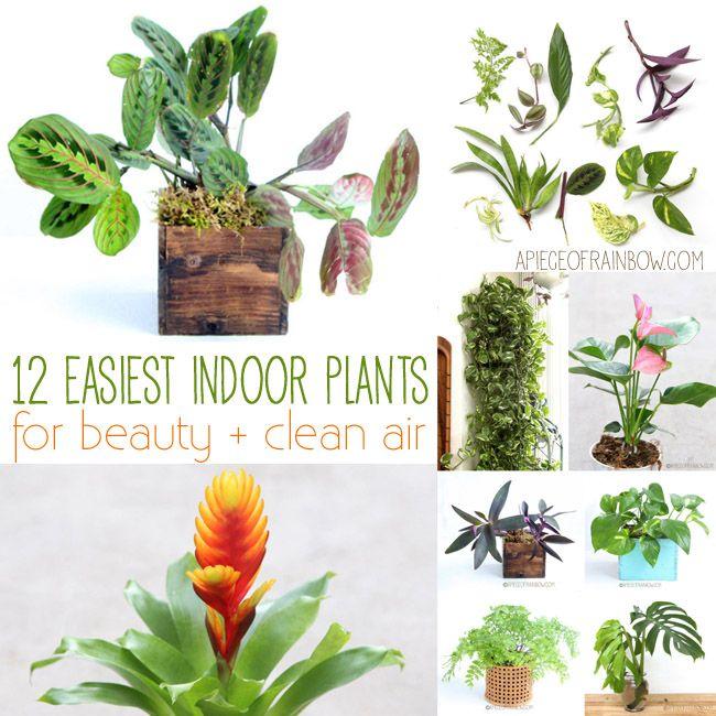 133 best indoor plants images on pinterest indoor house for Easiest indoor plants to grow
