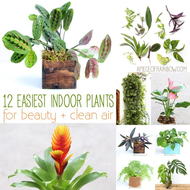1000 Images About Indoor Plants On Pinterest Snake