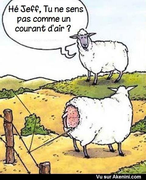 Les 286 meilleures images du tableau images dr les animaux funny cartoons animals sur - Animaux humoristiques ...