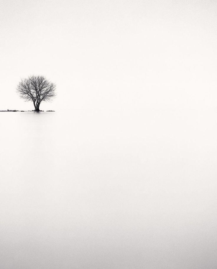 Michael Kenna - Biwa Lake Tree, Study 2, Omi, Honshu, Japan, 2002