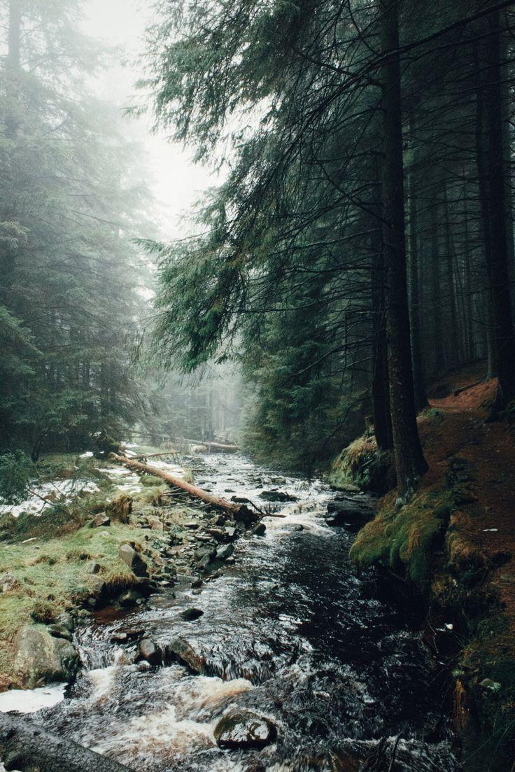 Ladyclough Forest | Daniel Casson Photography