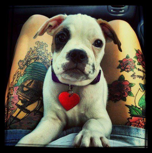 Cute photo of dog and tattooed girl