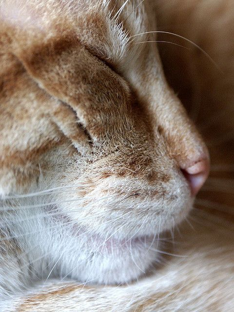 Close-up of a sleeping cat