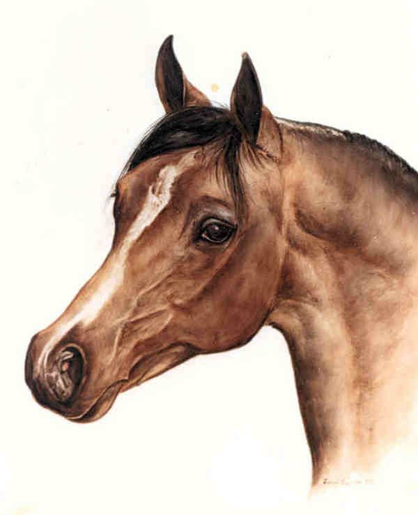 Very detailed horse portrait glass - 25.4KB